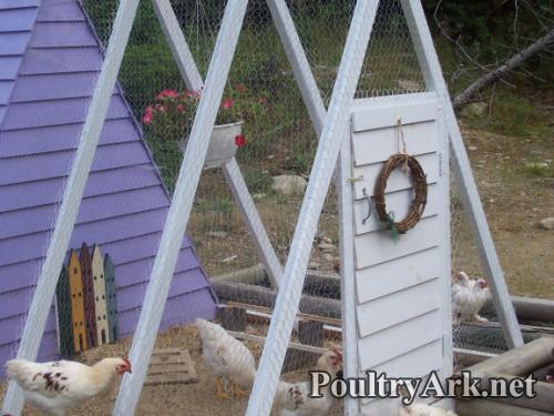 Poultry Ark Run